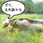 ホントに働いてる? IKEA立川隣の空き地のヤギ