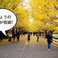 昭和記念公園紅葉アイキャッチ