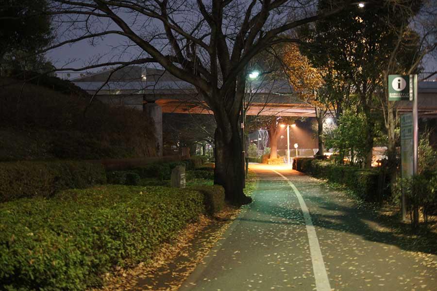 昭和記念公園illumination4