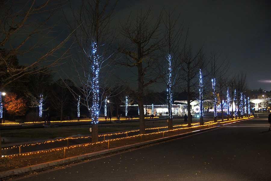 昭和記念公園illumination7
