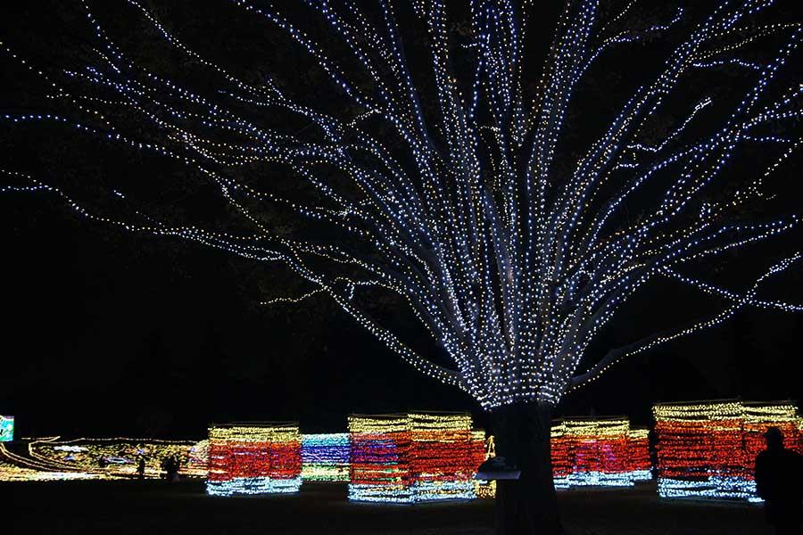 昭和記念公園illumination23