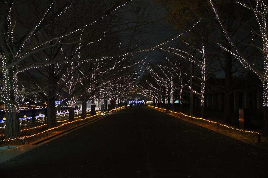 昭和記念公園illumination28