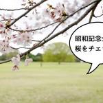 【明日ならイケる!?】花見ラストチャンスかもしれない昭和記念公園の桜をチェックしてきた