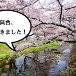【咲き具合丸わかり】立川桜の名所の咲き具合を見てきた!それにしても根川緑道は最高で最高で最高だ!【便利な地図付】